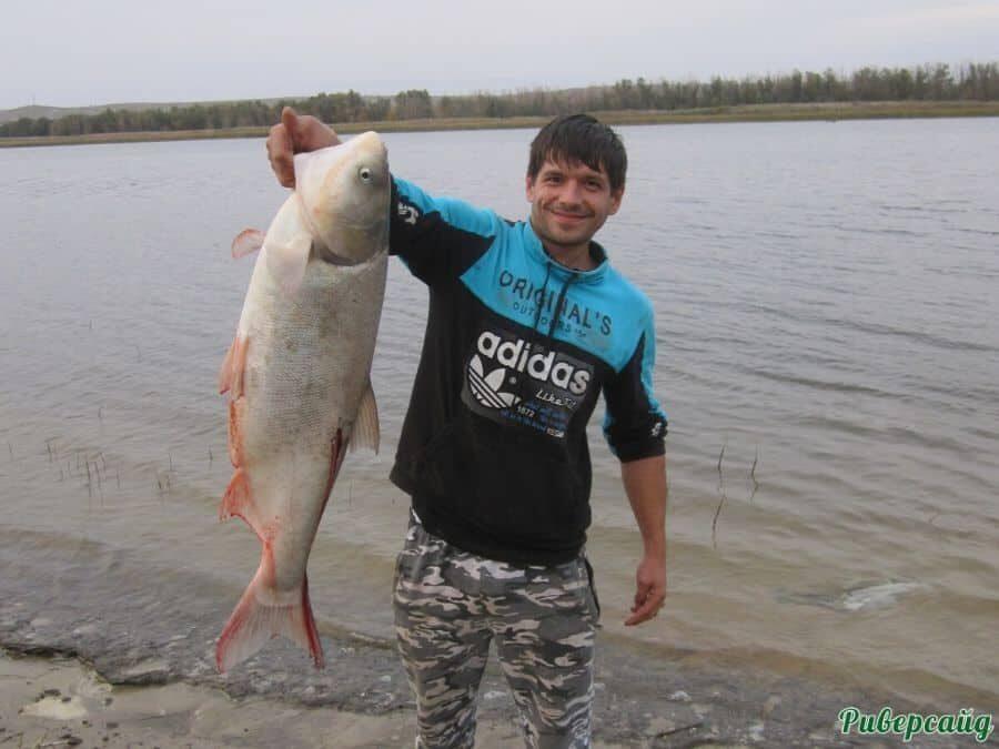Рыбалка на Дону Волгоградская область