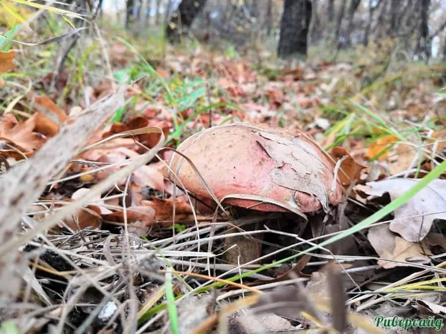 Сбор грибов отдых на Дону Волгоградская область